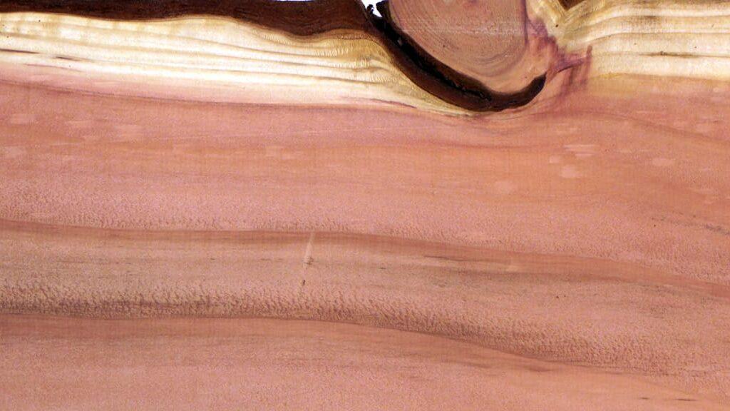 Holzbrett eines Mammutbaums