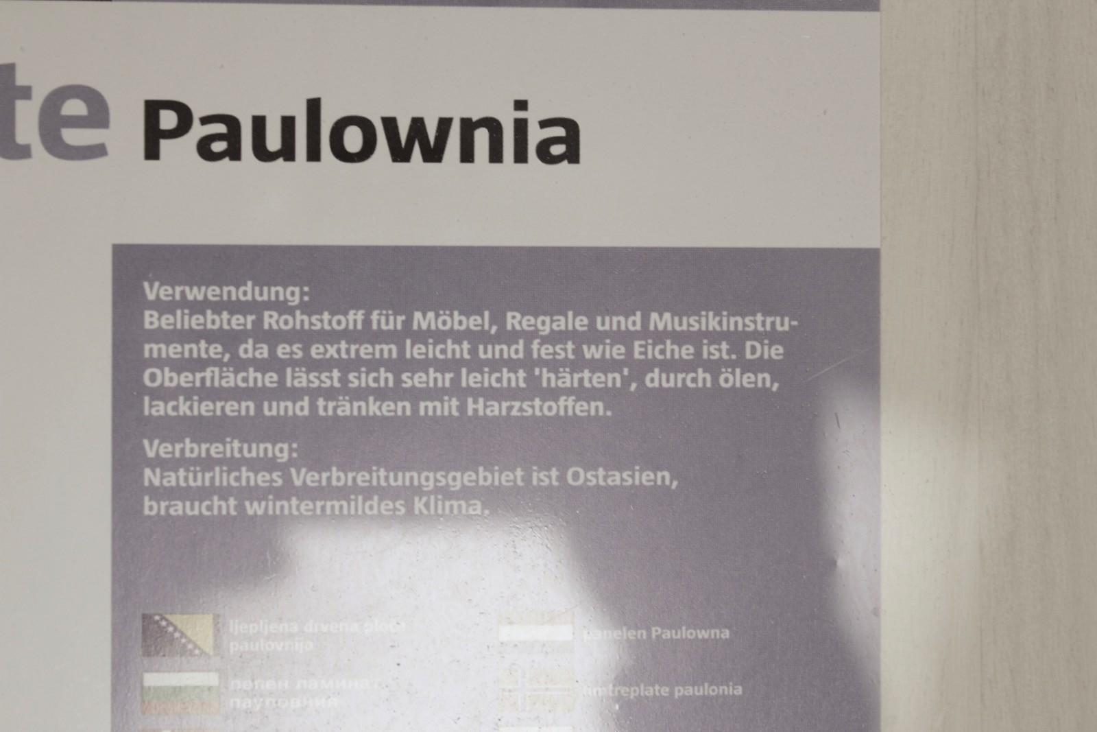 Foto der Paulownia Produktbeschreibung